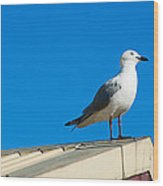 Seagulls On Roof Top Wood Print