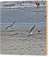 Seagulls On The Beach Wood Print