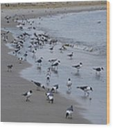 Seagulls On The Delaware Bay Wood Print by Bill Cannon