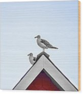Seagulls Perched On The Rooftop Wood Print