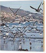 Seagulls Seagulls And More Seagulls Wood Print