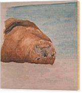 Seal 1 Wood Print