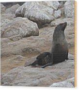 Seal In The Sun Wood Print