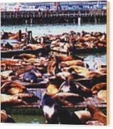 Seal Wharf Wood Print