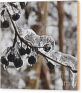 Sealed In Ice Wood Print