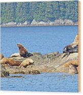Seals In Alaska 1 Wood Print
