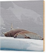 Seals Laying On A Piece Of Ice Wood Print