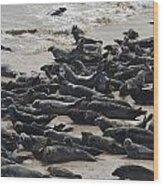 Seals On The Blasket Island Wood Print