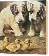 Sealyham Puppies And Ducklings Wood Print
