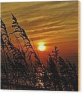Seaoats And Sunrise Hatteras Island 1 7/31 Wood Print