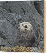 Seaotter - The Old Man Wood Print