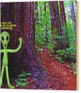 Searching For Friends Among The Redwoods Wood Print