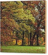 Searching For Maple Magic Wood Print