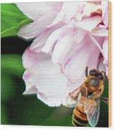 Searching Pink Flower Wood Print