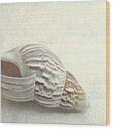 Seashell 6800 Wood Print