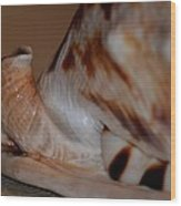 Seashell Abstract 1 Wood Print