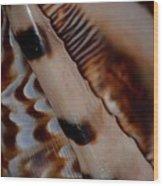 Seashell Abstract 2 Wood Print