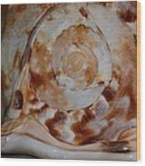 Seashell Abstract 5 Wood Print
