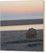 Seashell Before Sunrise Wood Print