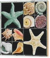 Seashell Collection Wood Print