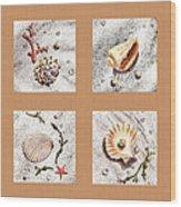 Seashell Collection II Wood Print