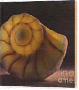Seashell Wood Print