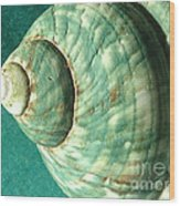 Seashell In Sunlight2 Wood Print