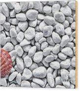 Seashell On White Pebbles Wood Print