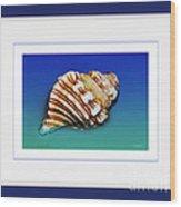 Seashell Wall Art 1 - Blue Frame Wood Print