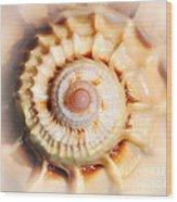 Seashell Wall Art 11 - Spiral Of Harpa Ventricosa Wood Print