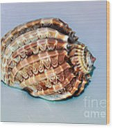 Seashell Wall Art 9 - Harpa Ventricosa Wood Print
