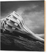 Seashell Without The Sea Wood Print