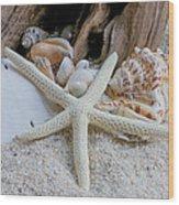 Seashells And Driftwood 2 Wood Print