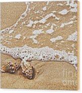 Seashells And Lace Wood Print