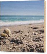 Seashells At The Shore Wood Print