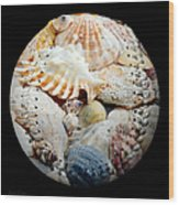 Seashells Baseball Square Wood Print