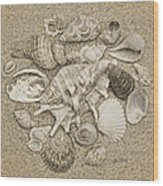 Seashells Collection Drawing Wood Print