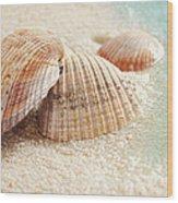 Seashells In The Wet Sand Wood Print