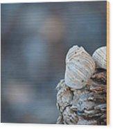 Seashells On Driftwood  Wood Print