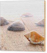 Seashells On Wood Dock Wood Print