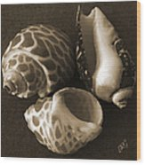 Seashells Spectacular No 1 Wood Print by Ben and Raisa Gertsberg