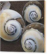 Seashells Spectacular No 23 Wood Print by Ben and Raisa Gertsberg