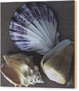 Seashells Spectacular No 30 Wood Print