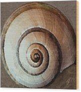 Seashells Spectacular No 34 Wood Print