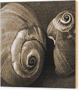 Seashells Spectacular No 6 Wood Print