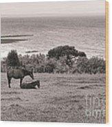 Seaside Horses Wood Print by Olivier Le Queinec