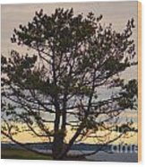 Seaside Pine Wood Print