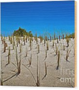 Seaside Sand Dunes Wood Print