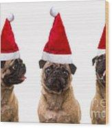 Seasons Greetings Christmas Caroling Pug Dogs Wearing Santa Claus Hats Wood Print