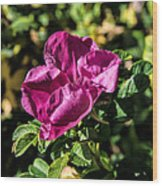 Seasons Last Rose Wood Print